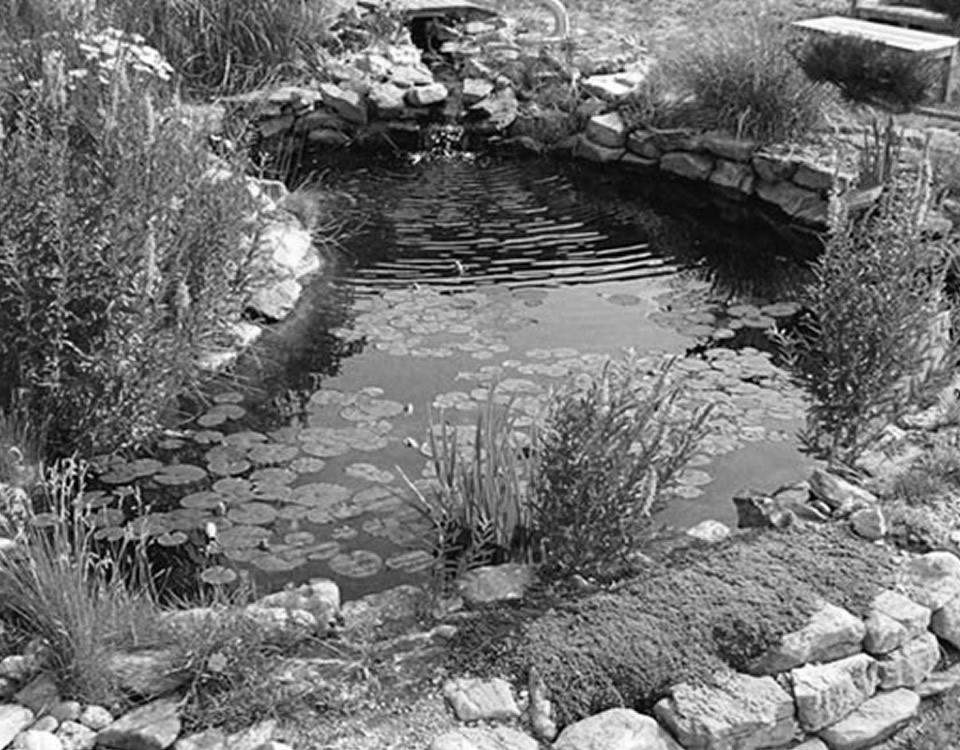 estanques